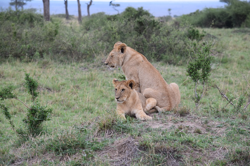 Young Lions on watch