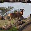 Haet Beast in the Serengeti