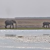 Elephant Herd at Amboseli