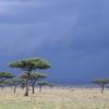 Mara Triangle - Rain is coming