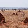 Termite mounds in Tarangire Park