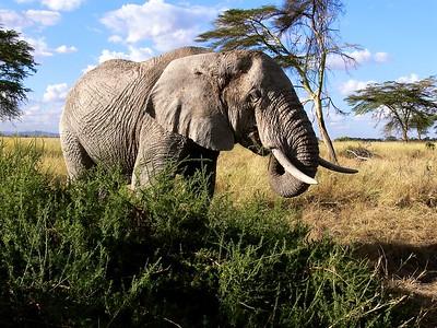 Eastern Africa 2006