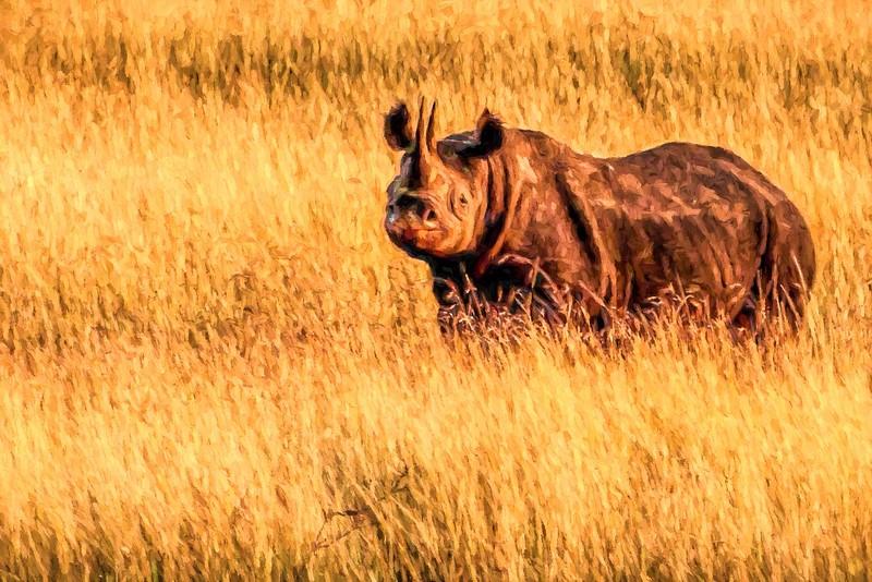 Painted Rhino