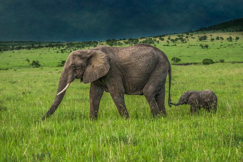 Following Mama