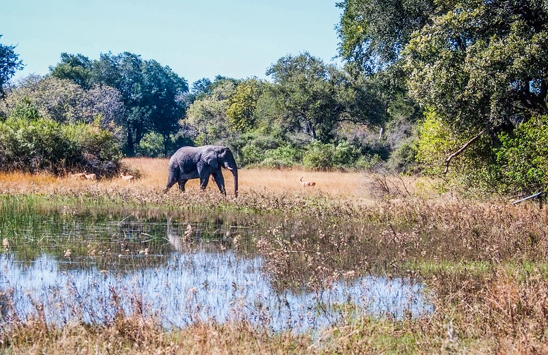 Elephant in the Landscape