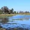 DSC_0263 w Okavango Delta
