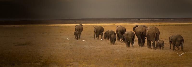 Elephants,