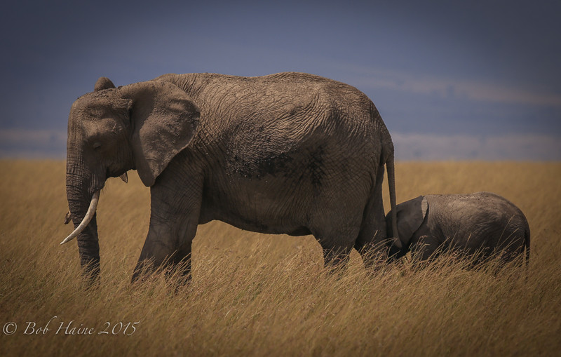 Elephants in the Grass, No. 2