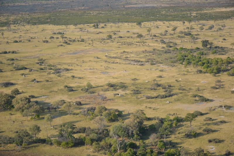 Termite Mounds, Okavango Delta, Botswana
