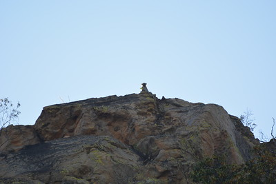 Vervet Monkey, Tsodilo Hills, Botswana