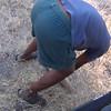 Bibi with Sausage Tree Fruit, Moremi Game Reserve, Botswana