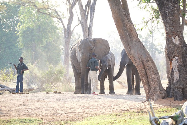 Elephant Cafe, Zambia