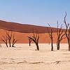 The Dead Trees of Deadvlei