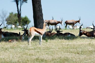 Springbok Alarm