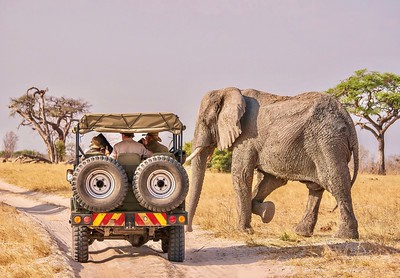 Safari close encounter