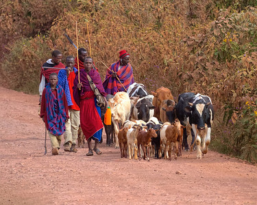 Ngorongoro Conservation Area, Tanzania.  A group of Masai herders
