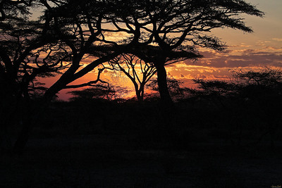 In Tanzania_Ndutu_Africa_, a glorious sunset