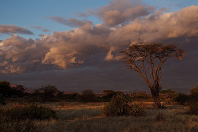 Larsen's Camp, Samburu National Park, Kenya at Sunrise5