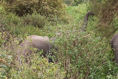 Elephants feeding in Lake Manyara, Tanzania