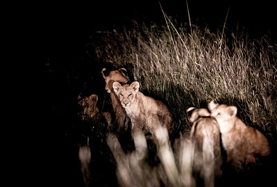 Cubs in the Grass (Night)