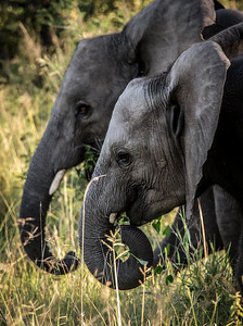 Elephant Brothers