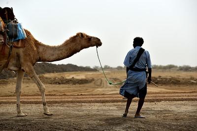 Chamelier mauritanien