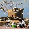 Essaouira-7015z