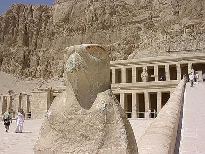 Haukevokter utenfor Hatsepsuts tempel (Foto: Ståle)