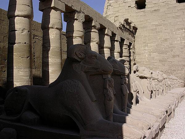 Bukkehodesfinxer ved inngangen til Karnak tempelkompleks (Foto: Ståle)