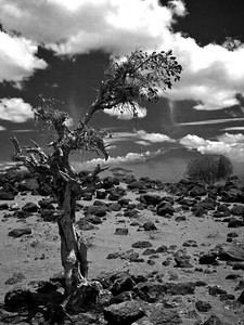 It could've been One Tree Hill in California, but the mountain reveals that we are in the beautiful and harsh environments of the Amboseli. (Foto: Geir)