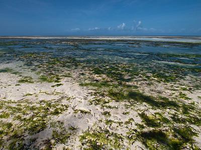 Lavvann på sørspissen av Zanzibar (Foto: Ståle)