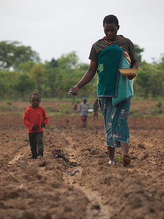 Mother and son planting corn, Makumba Village, Kalomo District, Zambia. (Foto: Geir)