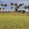 Prairie du delta d'Okavango