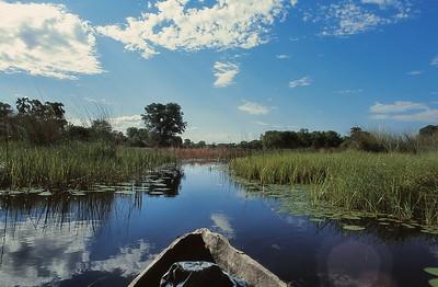 Okavango - En balade dans le delta