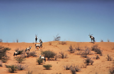 Groupe d'Oryx