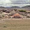 Kalahari - Piste de transition