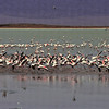 Parc du N'gorongoro - Flamants roses