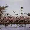 Lac Manyara - Envol erratique