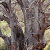 Lac Manyara - Baobab