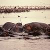 Lac Manyara - Bataille d'hippopotames