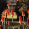 La flore du campement