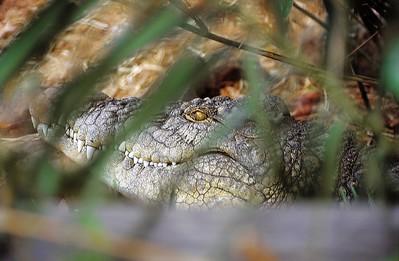 Ferme de crocodiles