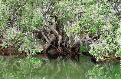 Rives du Zambèze