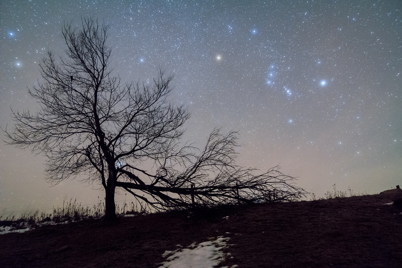 Orion Framed by Tree