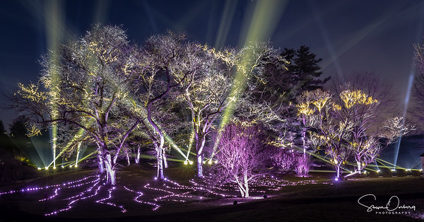 Arb Illumination-3