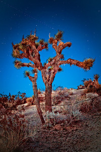 Joshua Tree, light painted at twilight Joshua Tree National Park