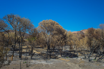 Valley of Burned Trees