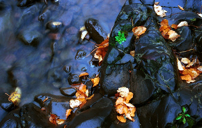 Sucker River and Poplar Leaves. I love the blue of the rock and water versus the gold of the poplar leaves. I debated years over this image and this is the first place it has ever been shown. Photographed with a Nikon N90s film camera and Fuji velvia slide film