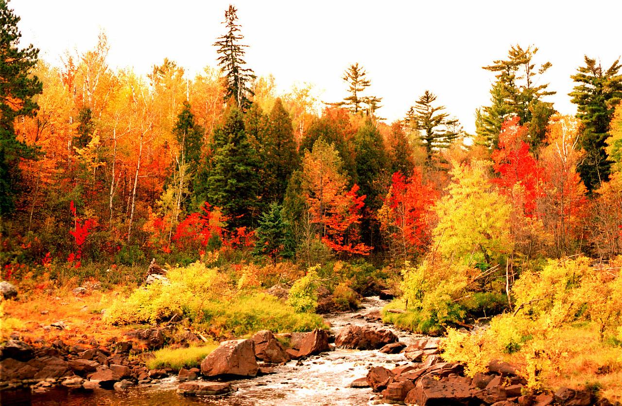 """Little Otter Creek in Full Bloom"""