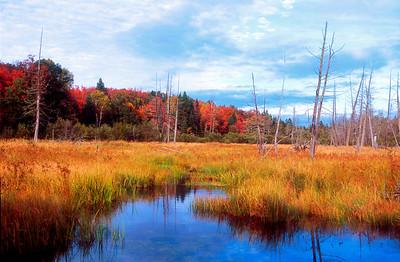 """""""Fall Marsh"""""""